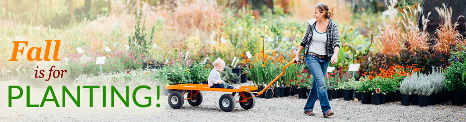 Fall is the time to plant - sales throughout the season!