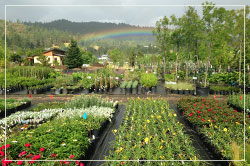 plant nursery in spring with rainbow