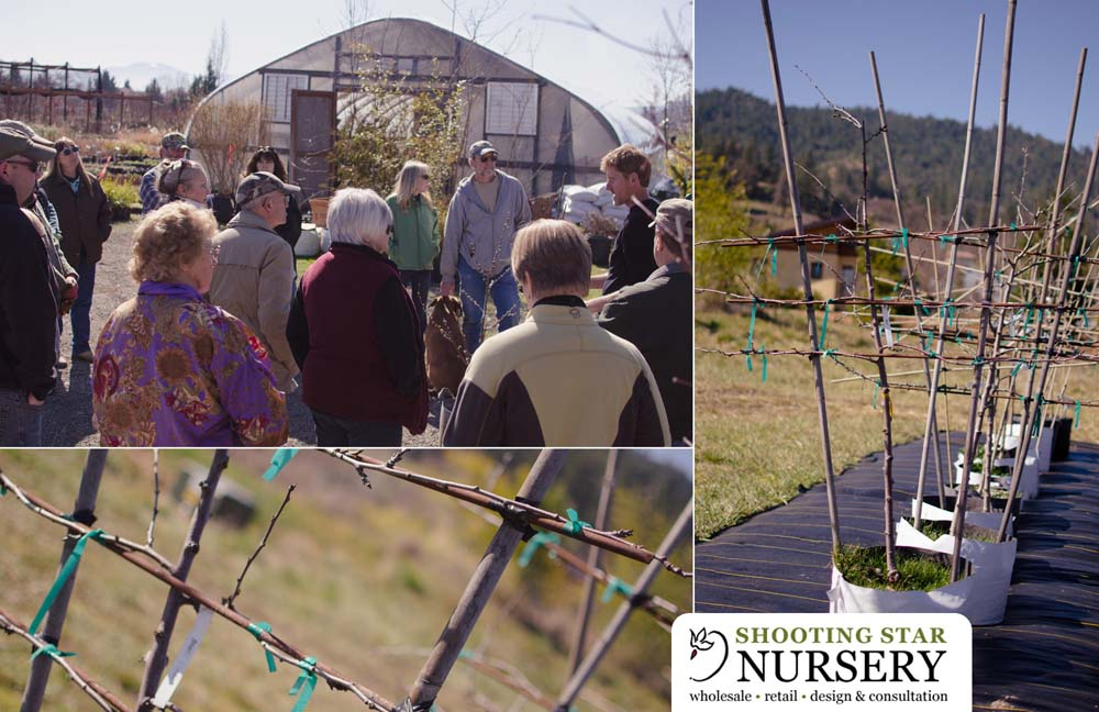 PruningClass collage1