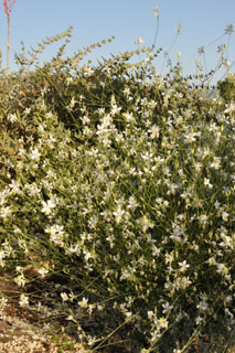 gaura-so-white-overall