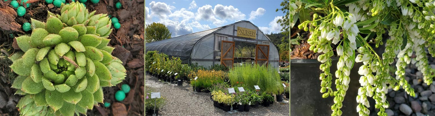 Spring at Shooting Star Nursery in Central Point - see our retail availability list
