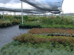 plants in wholesale nursery shade structure