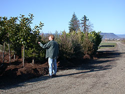 Scott with trees at wholesale nursery
