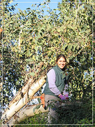 Bonni Criswell pruning a tree