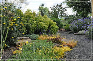 Landscape design and consultation